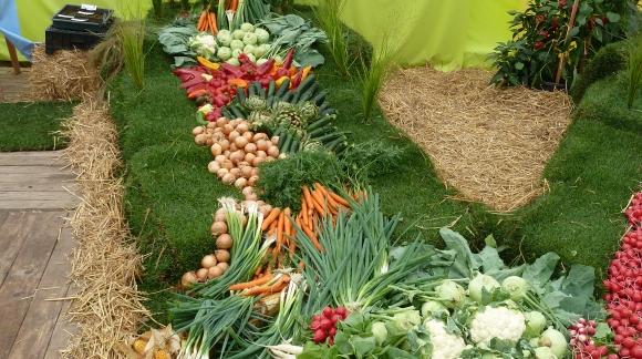 Les différentes méthodes de conservation des fruits et légumes